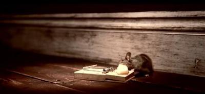 John Nolan films - Nolan's Cheddar