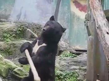 Кунг-фу медведь