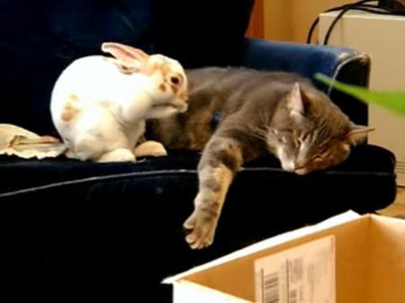 Кролик и Кот - символы 2011 года!