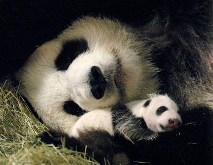 Панда =)