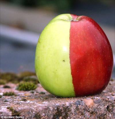 Прикольное яблоко!