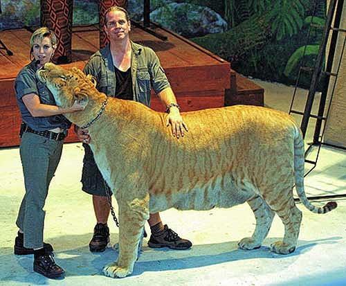 Легр - новое животное