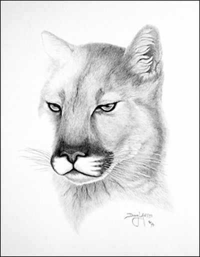 Рисунки карандашом Дуга Лэндиса (11 фото)