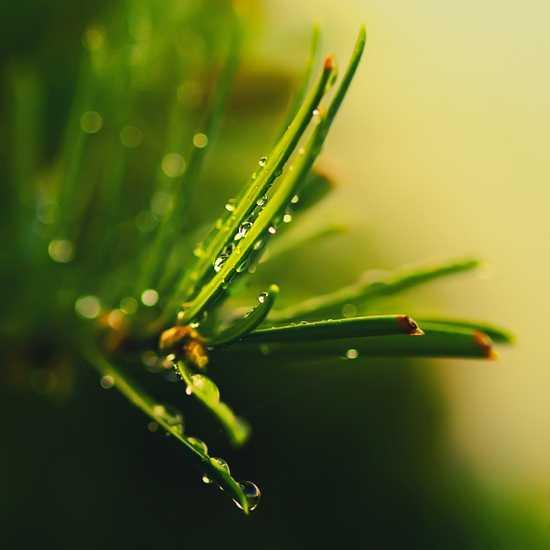 Макромир растений
