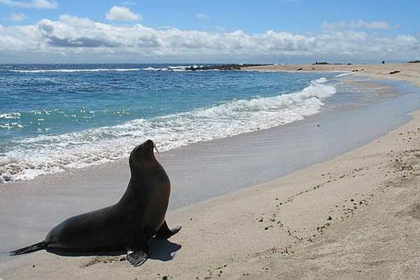 Galapagosy
