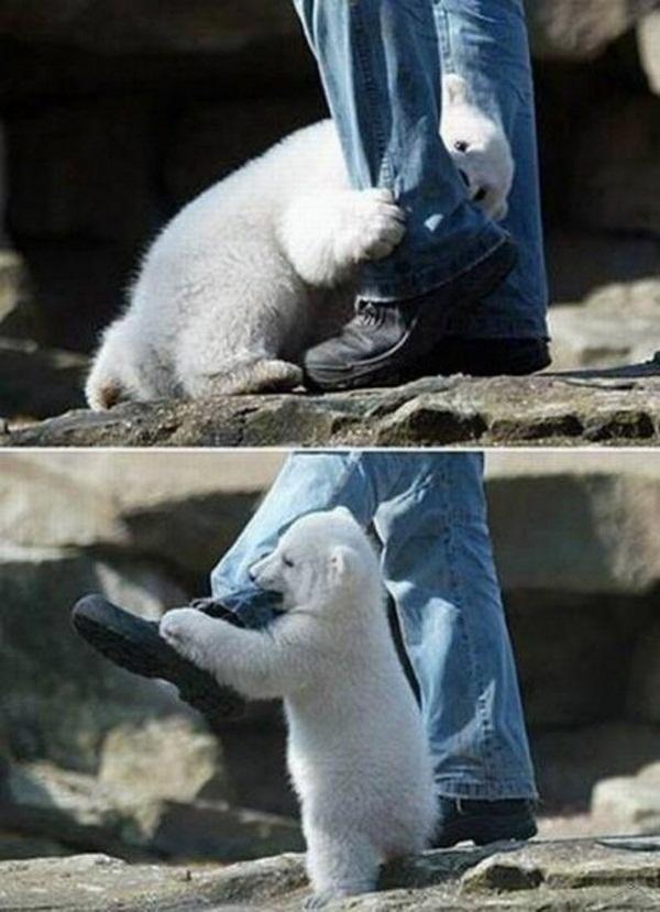 Нападение Полярного Медведя на Человека (слабонервным не смотреть)